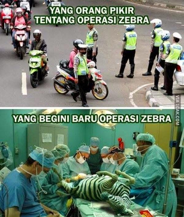zebra-operasi
